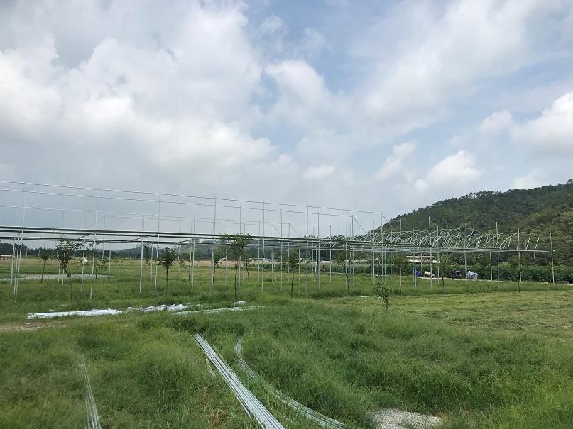 增城阿凡提户外拓展大棚煌城温室工程阿凡提户外拓展大棚工程案例
