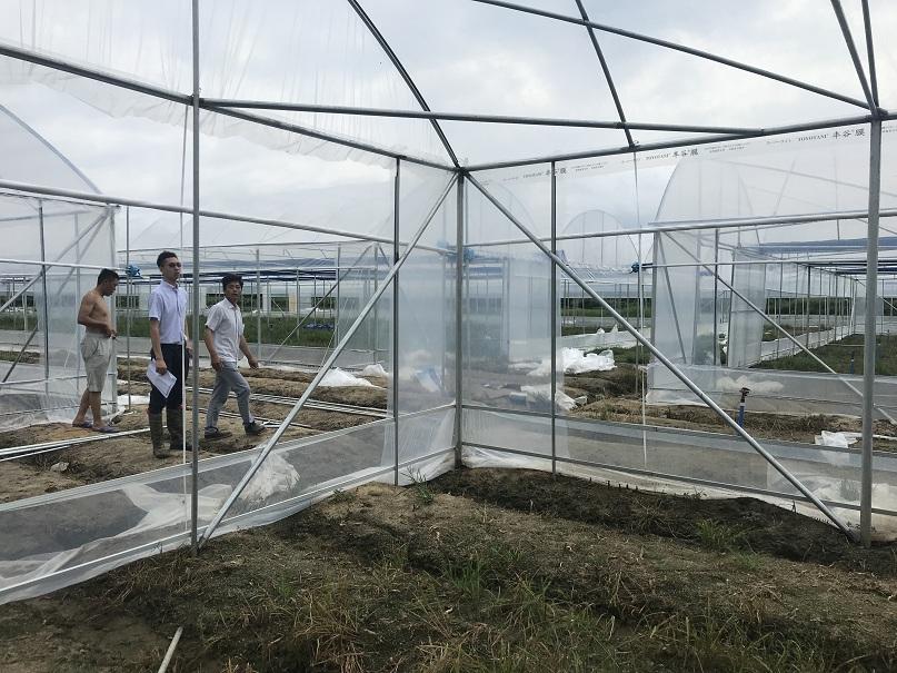 蔬菜大棚-煌城温室工程公司蔬菜大棚
