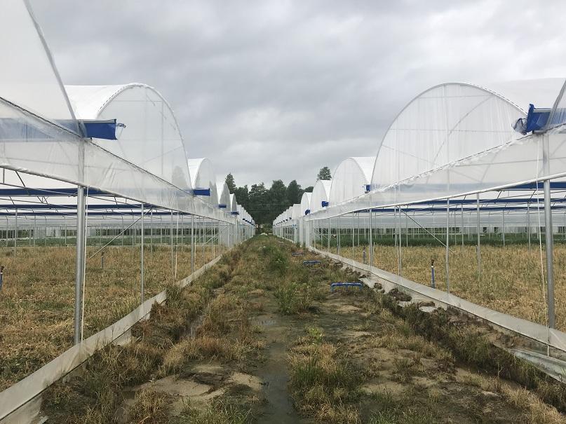 广东韶关蔬菜大棚温室大棚-煌城温室蔬菜大棚工程
